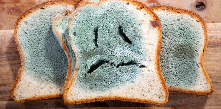 Resultado de imagen para alimentos con moho