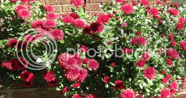 photo autumn2010148.jpg