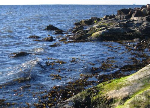early morning at the seashore :: tidlig morgen i strandkanten