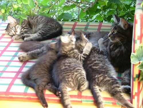 gatti con max