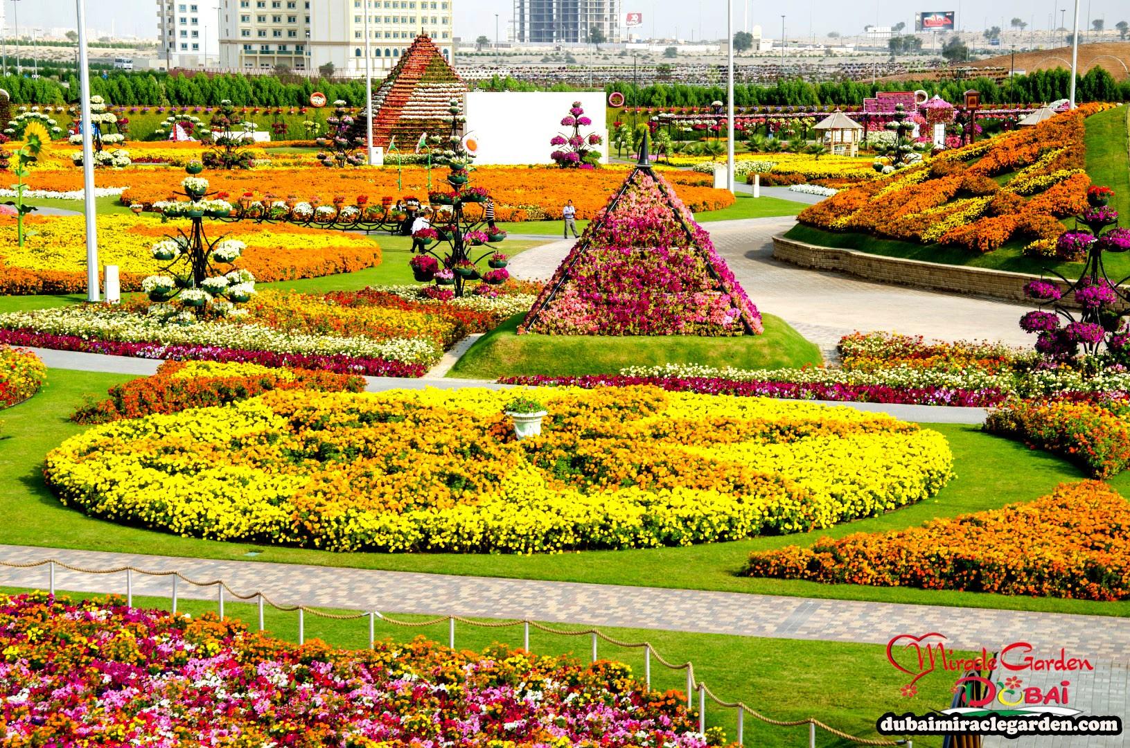 Dubai Miracle Garden 19