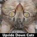 upside down cats