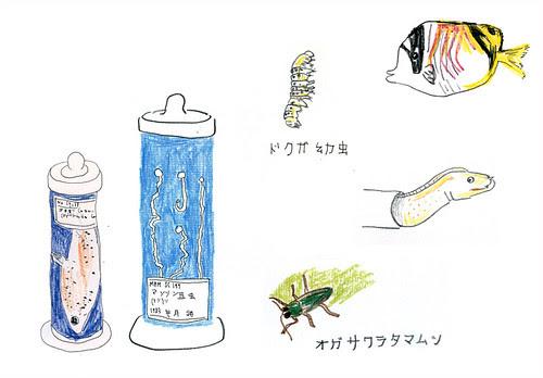 japan drawing