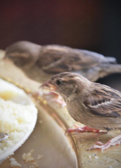 Sparrow - Mosquee de Paris