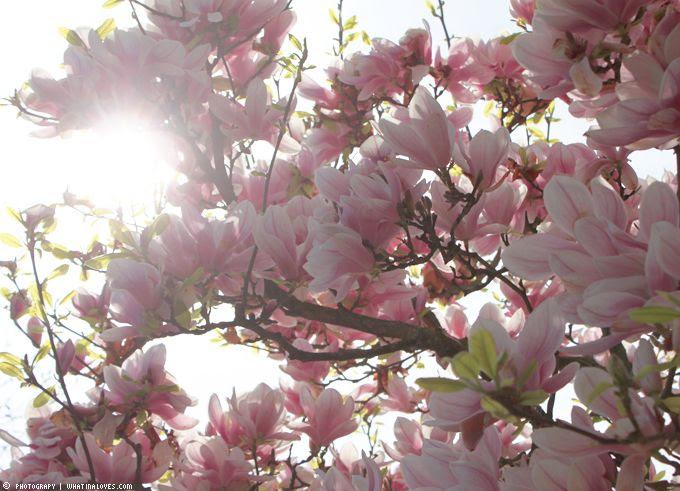 http://i402.photobucket.com/albums/pp103/Sushiina/cityglam/home8-2_zps61df2eac.jpg?t=1366444065