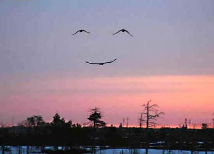sorriso