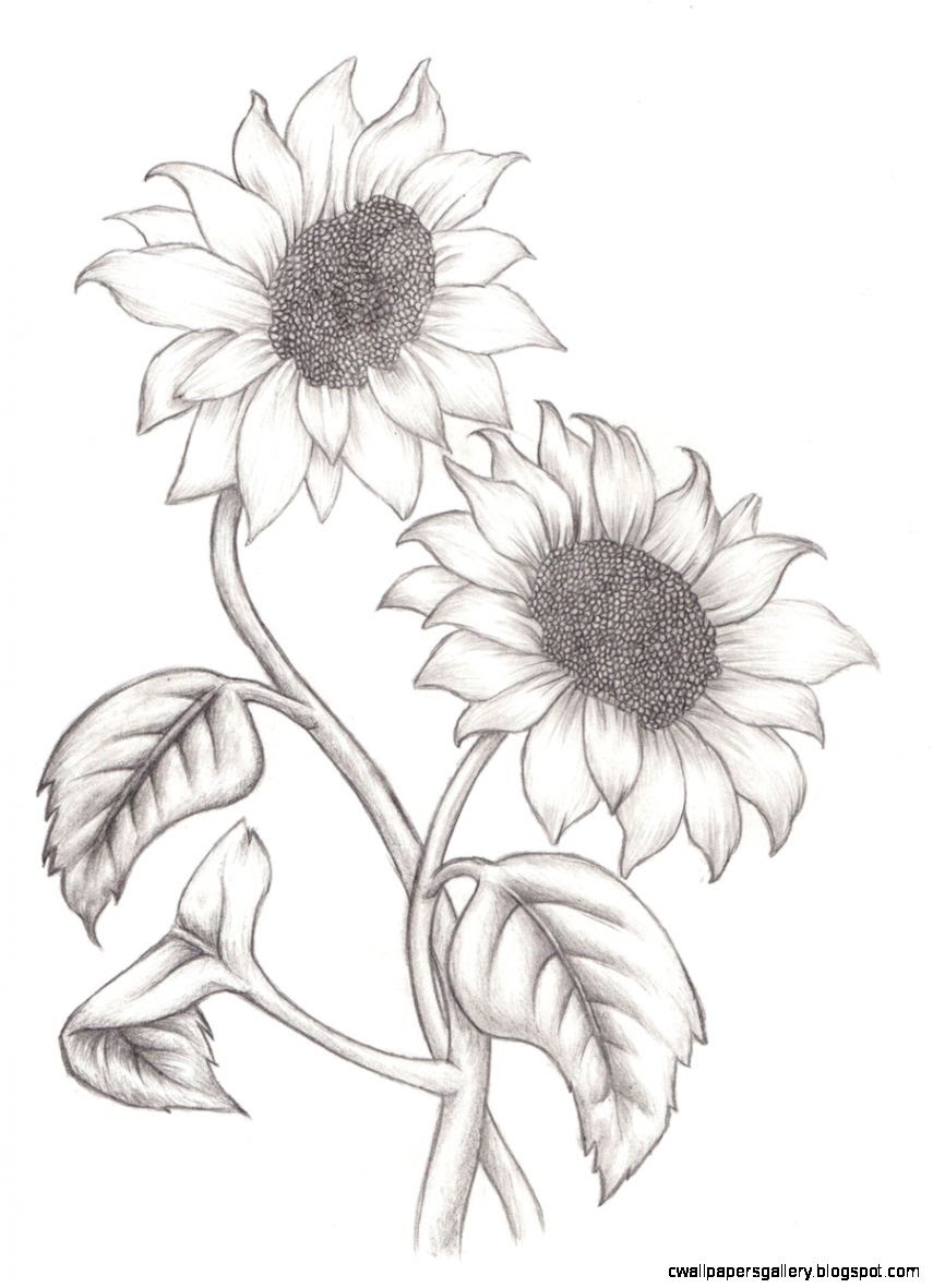 Simple Sunflower Drawing at GetDrawings | Free download