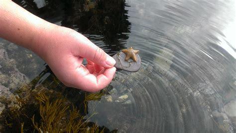 Live Baby Starfish