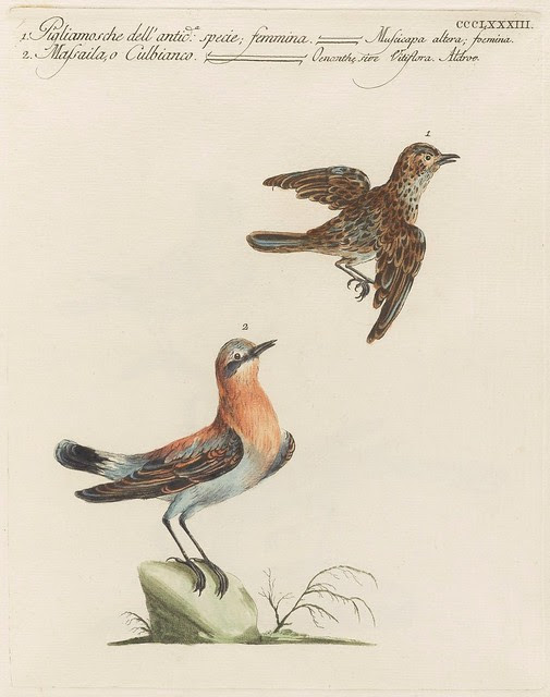 2 short-beaked birds, 1 in flight : flycatcher species
