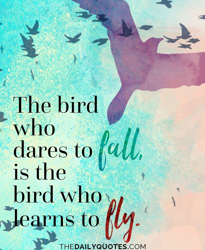 Quotes About Wings Of Birds 46 Quotes