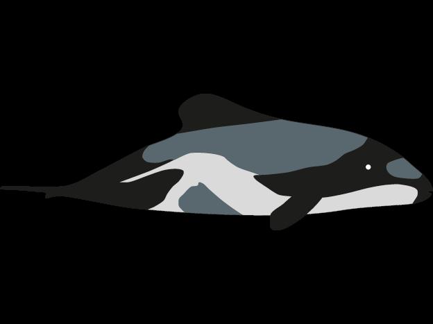 39 delfin vorlage zum ausdrucken  besten bilder von