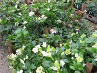 Gartenveranstaltung