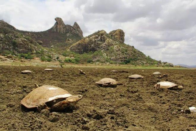 brazil cimetière tortue, tortue die-off, la masse die-off, brazil masse tortue die-off, 400 tortues mortes brazil