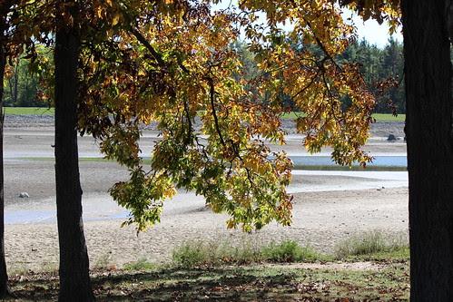 IMG_2850_Leaves_&_Dry_Lake