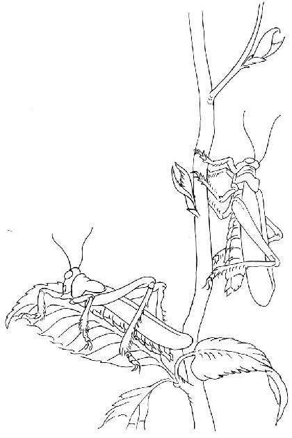 insekten ausmalbilder drucken - zeichnen und färben