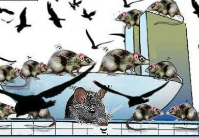 Resultado de imagem para CONGRESSO DE RATOS