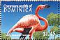 American Flamingo Phoenicopterus ruber