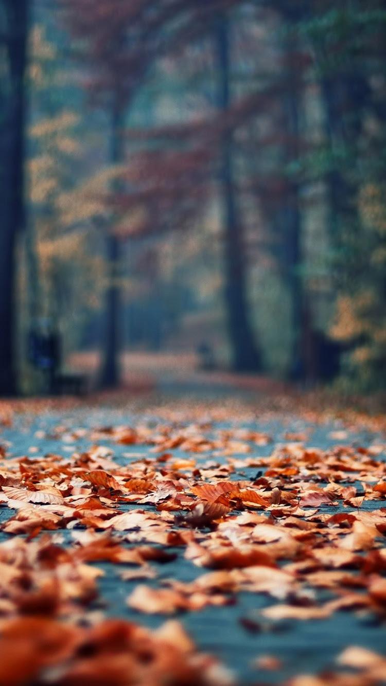 秋のさびた葉公園路地iphone 6 Android自然壁紙 750 1334 Iphone