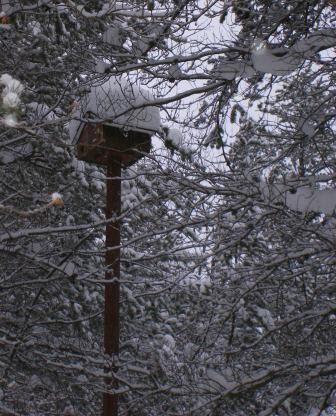 Our Birdhouse