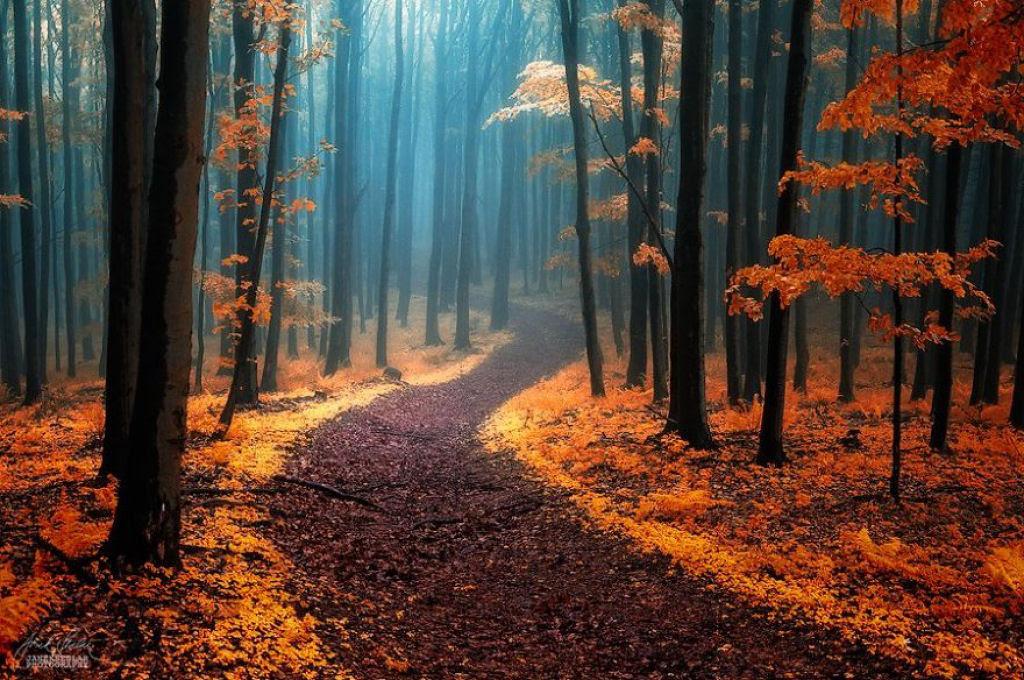 Os bosques outonais oníricos de um fotógrafo tcheco 01