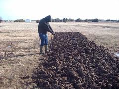 digging a potato bed