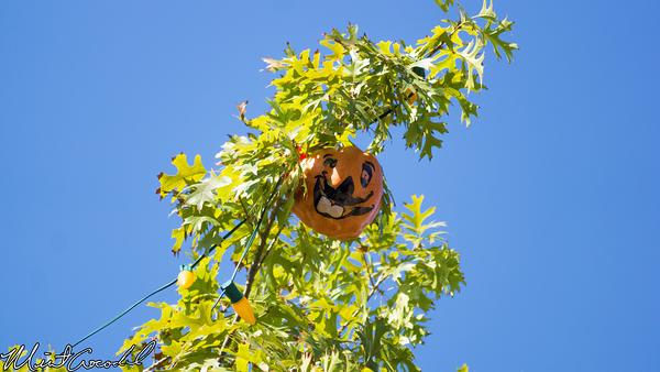 Disneyland Resort, Disneyland, Frontierland, Halloween Tree, Halloween Time