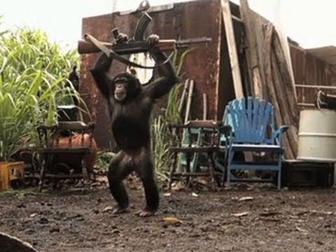 Macaco com AK47