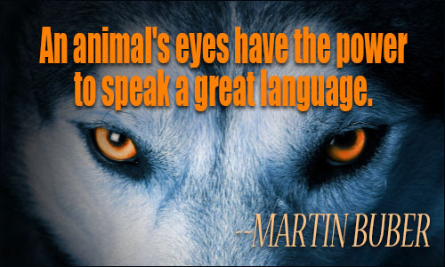 Animals Quotes