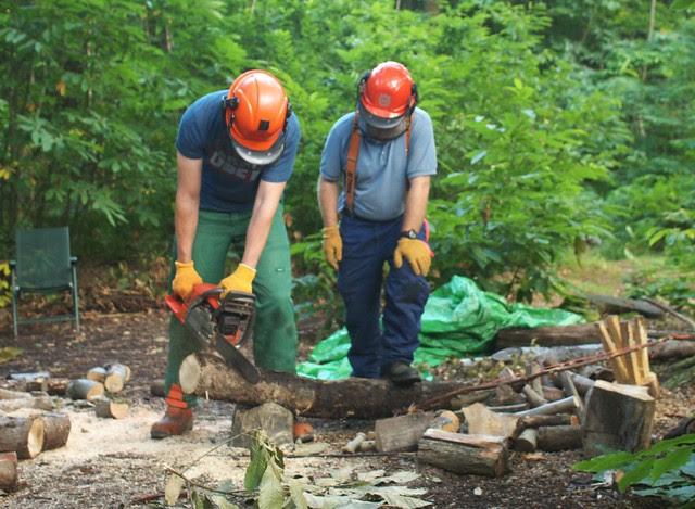 DSC_6980 chainsawing logs