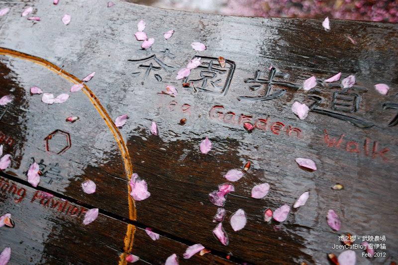 2012_0227_雨之櫻。武陵農場DSC_4287_07