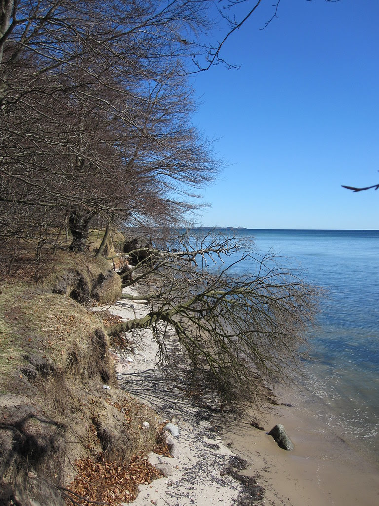Beach and forrest