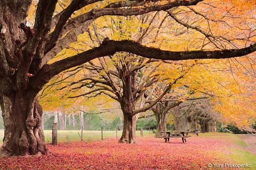fotografii frumoase toamna Autumn