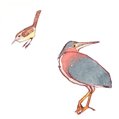 Birds from a rainy morning