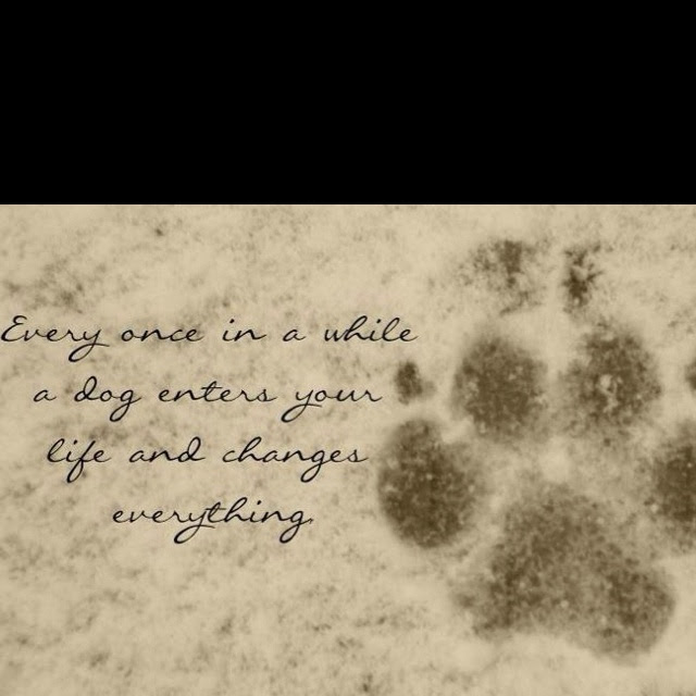When Your Dog Dies Quotes. QuotesGram