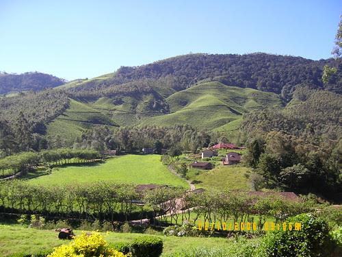 Mattupetty dairy farm