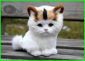 Kucing Lucu Gemesin