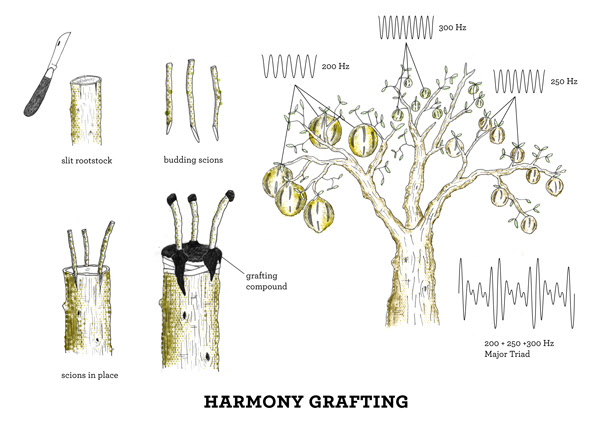 Acoustic Botany - Harmony Grafting