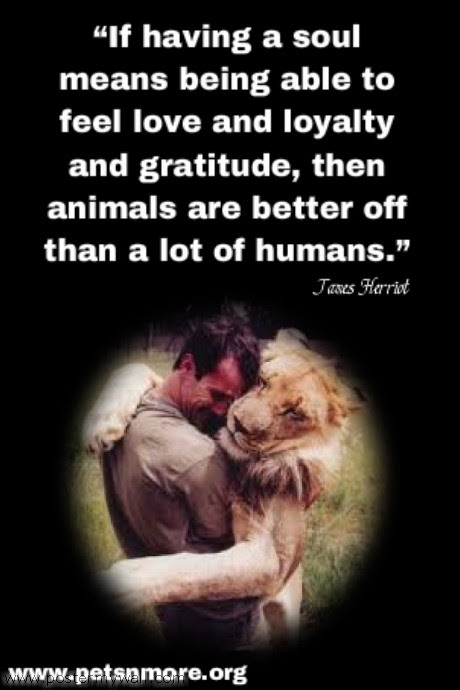 Quotes About Animal Souls 36 Quotes