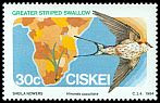 Cl: Greater Striped-Swallow (Cecropis cucullata) SG 62 (1984) 30