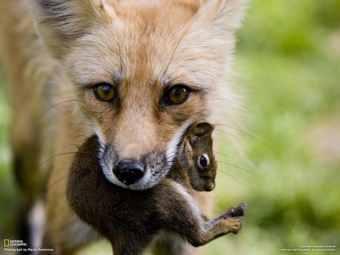 Perierga.gr - Φωτογραφίες από το National Geographic