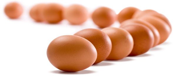 Egg Prices Likely to Rise Amid Laws Mandating Cage-Free Henhouses - LGF Pages