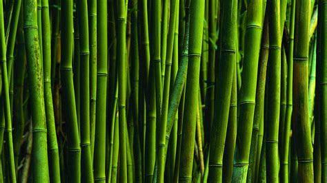 Bamboo Wallpaper HD   WallpaperSafari