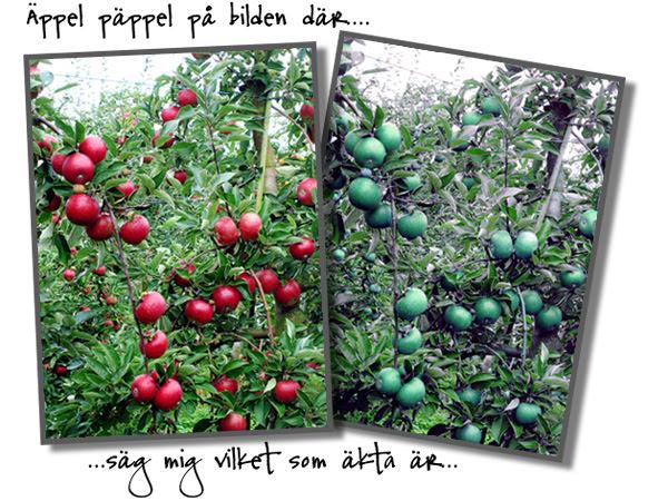 appelpappel