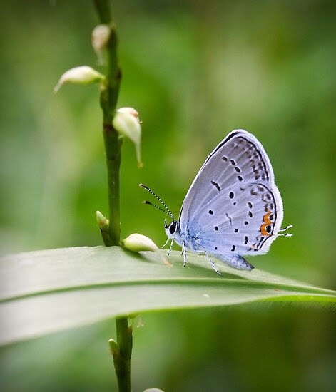 http://www.redbubble.com/people/dlamb/works/9252469-spotted-wing?c=151628-macro