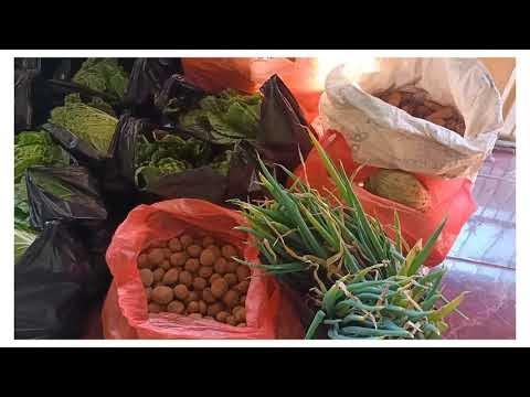 Proses Panen dan Sedekah Sayur Petani Rumah Koran Tunas KBA Kanreapia