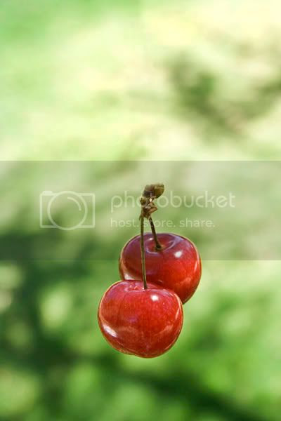 117 Cherry Time