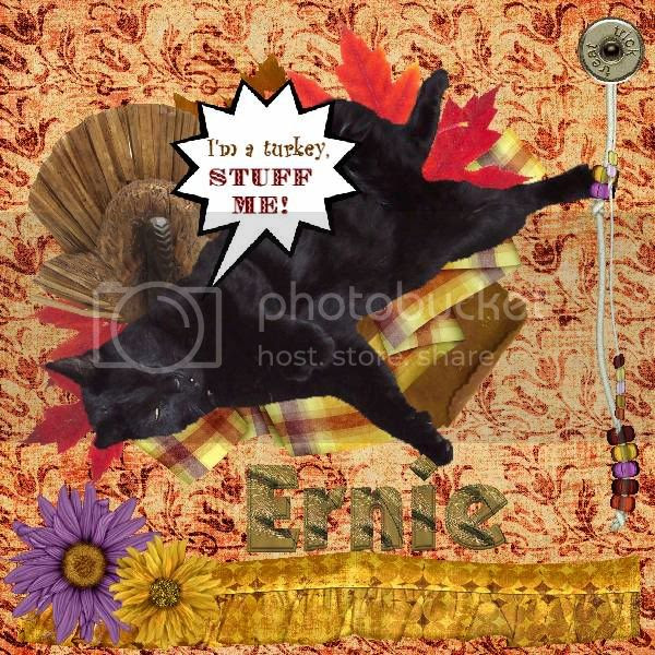 House Panther,Domestic Cat,Talking Turkey
