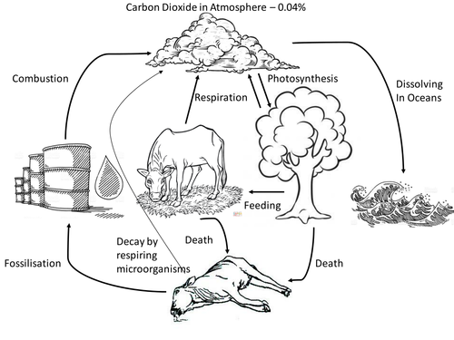 31 Carbon Cycle Worksheet High School - Worksheet Project List