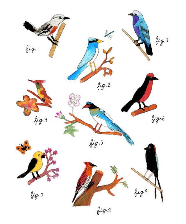 Daniel's birds