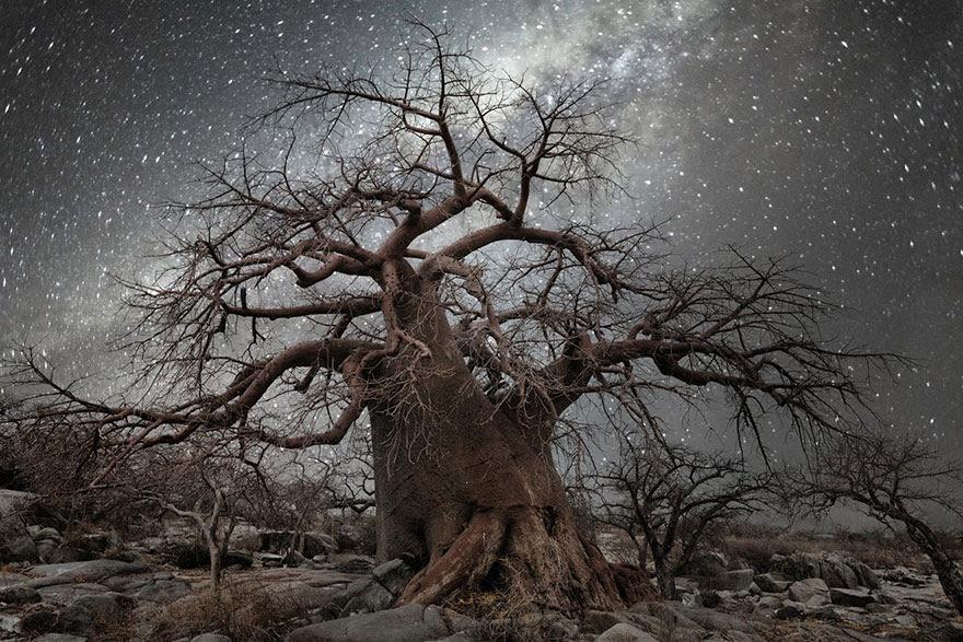 fotos-arboles-viejos-noche-estrellas-beth-moon (3)